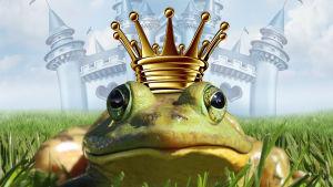 En groda med krona