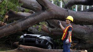 En pojke dödades när ett träd föll över bilen han färdades i.