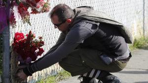 En man lägger ut blommor för att hedra minnet av offren i klubbranden i Oakland.