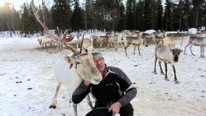 Poromies Juha Virkkunen hoivaa Pikku-Ukkoa.