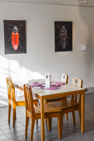 Pekka Malinens bilder på skalbaggar ur Naturhistoriska museets samlingar, i museets kafeteria i Helsingfors.