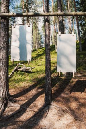 Kaksi peltiä joissa kädensijat roikkumassa mäntyihin kiinnitetystä poikkipuusta, nimeltään ukkospelti, Soivassa Metsässä Suomussalmella.