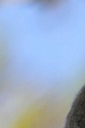 Sarvipöllö tuijottaa takaisin tanakasti.