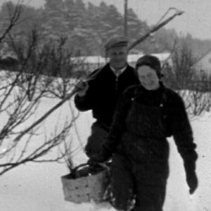 Pariskunta puutarhassa talvella