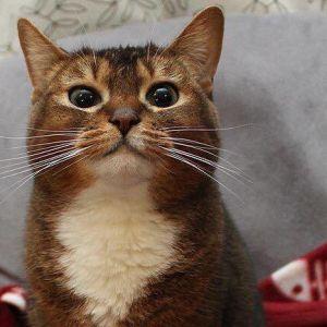 Kissa nauttii hieronnasta.