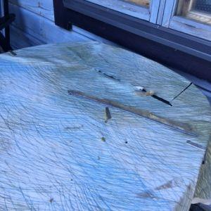 Christels vaxduk har rivits i bitar två gånger. Ullen mellan stockarna har rivits ut och en fågel har lämnat sina visitkort på terassen på holmen i Ingå. Vem har varit i farten?