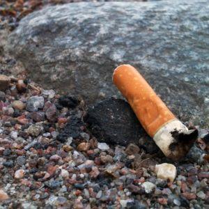 Tobaksfimp, 2011