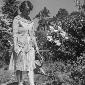 Nainen kastelee kasveja Haapasaaressa vuonna 1964