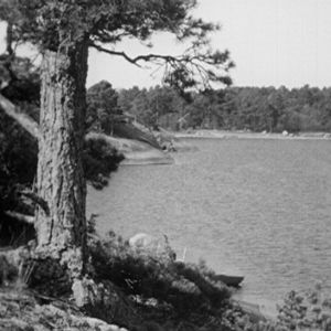Haapasaari 1964