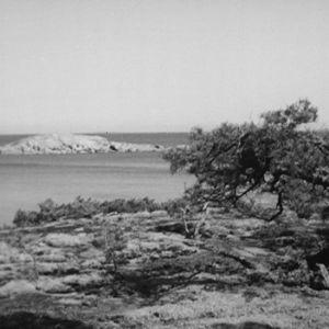 Luoto Haapasaaren edustalla 1964.