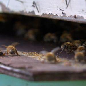 bin vid bikupans ingång