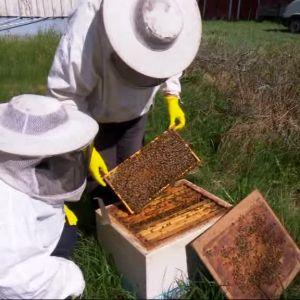 bin och två biodlare