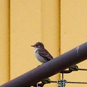Fågel på torkställning, insänt av Benita Berglund i Lappfjärd