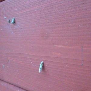 insekt på vägg
