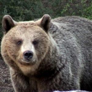 Karhu ohjelmassa Pallo Hallussa (2005)