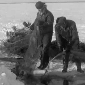 Män som sätter fisknät i vattnet
