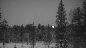 Aamuista metsää Sompion Lapion Savukoskella.