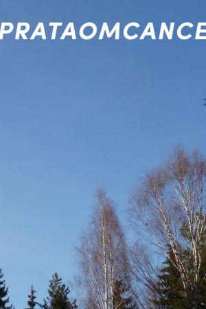 blå himmel och nakna, lövlösa trädtoppar, björk  och grantoppar