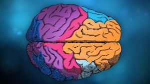 Kuva aivoista.