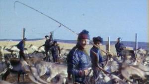 Poronhoitoa 1976