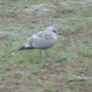 Bror Backholm i Övermark undrar vad det är för fågel?