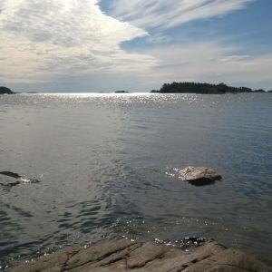 hoppande gädda i strandvattnet