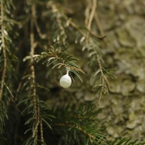 vit organisk boll på grangren