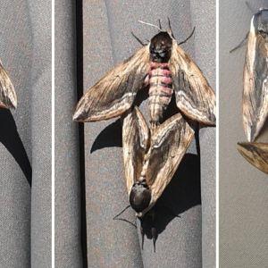 bevingad insekt