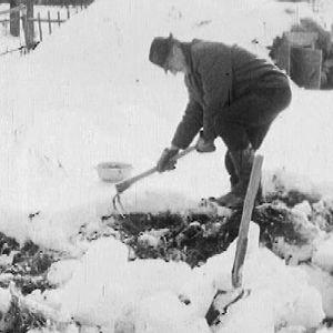 Talvi yllätti viljelijät Pohjois-Suomessa 1968.
