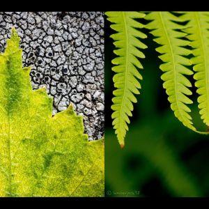 Vihreät lehdet Suomen kesässä