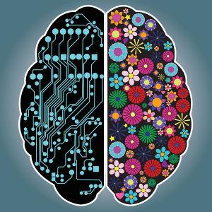 Grafik som visar en hjärna, med de två hjärnhalvorna åtskilda.