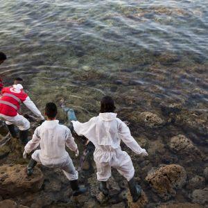 Libyan Punaisen puolikuun työntekijät nostivat merestä rantaan ajautuneita  siirtolaisten ruumiita Libyan rannikolla kesäkuussa 2017.
