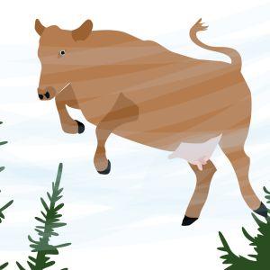 Lehmä lentää