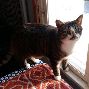 Kissa kissatalon ikkunalla