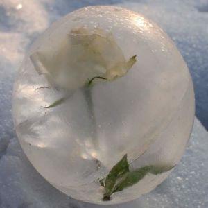 Valkoinen ruusu pallon muotoisessa jäälyhdyssä