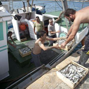 Espanjalaisia kalastajia lastaamassa kaloja pois veneestä