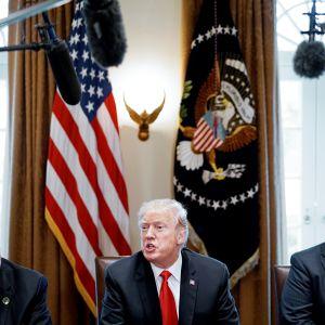 Donald Trump tapaa teräs- ja alumiiniteollisuuden johtajia Valkoisessa talossa Washingtonissa.