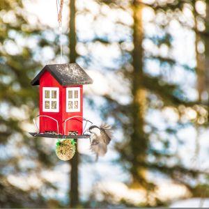 Lintu lentää ruokintapaikalle syömään.