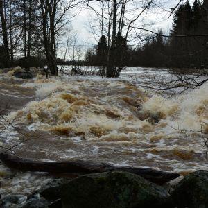 Tulviva Kyrönjoki