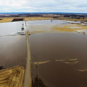 Kyrönjoesta tulvivaa vettä pelloilla Ilmajoella Röyskölän pengerrysalueella sunnuntaina otetussa ilmakuvassa 22. huhtikuuta.