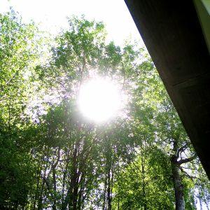 Aurink paistaa puun lehvästön lävitse.