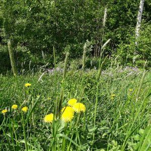 Kesäinen niitty Seinäjoella 30.5.2018