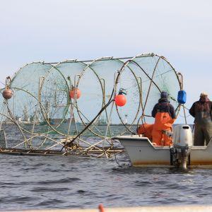 Lohirysä meressä, kalastajat veneessä
