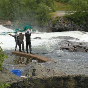 Käpäläkalastusta Näätämöjoella heinäkuussa 2018