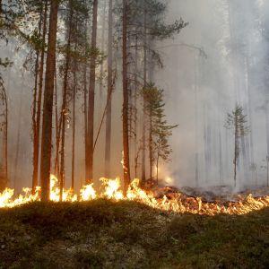 Metsäpalo Ljusdalin kupeessa 17.07.2018.