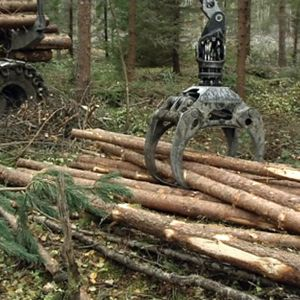 Metsätyökone nostelee kaadettuja puita.