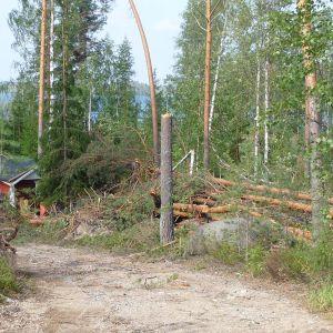 Asta-myrskyn kaatamia puita mökkitiellä