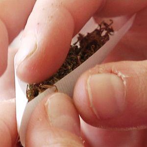 Kannabissätkää kääritään.