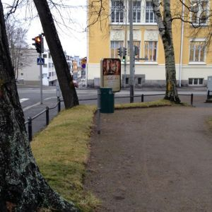 Keltaisella värillä merkittyjä puita Kuopion Snellmaninpuistossa