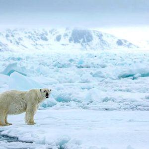 Jääkarhu lumisessa ja jäisessä maisemassa.